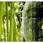 BILD AUF LEINWAND Größe 120x80cm BAMBUSWALD BUDDAH living A04184 DEKOR gerahmt auf echtem Keilrahmen. Kunstdruck als Wandbild auf Rahmen. Günstiger als Ölbild Gemälde Poster Plakat mit Bilder